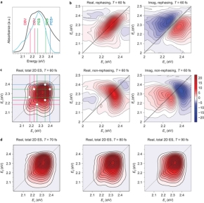 Quantum coherence and energy transfer in light-harvesting complexes